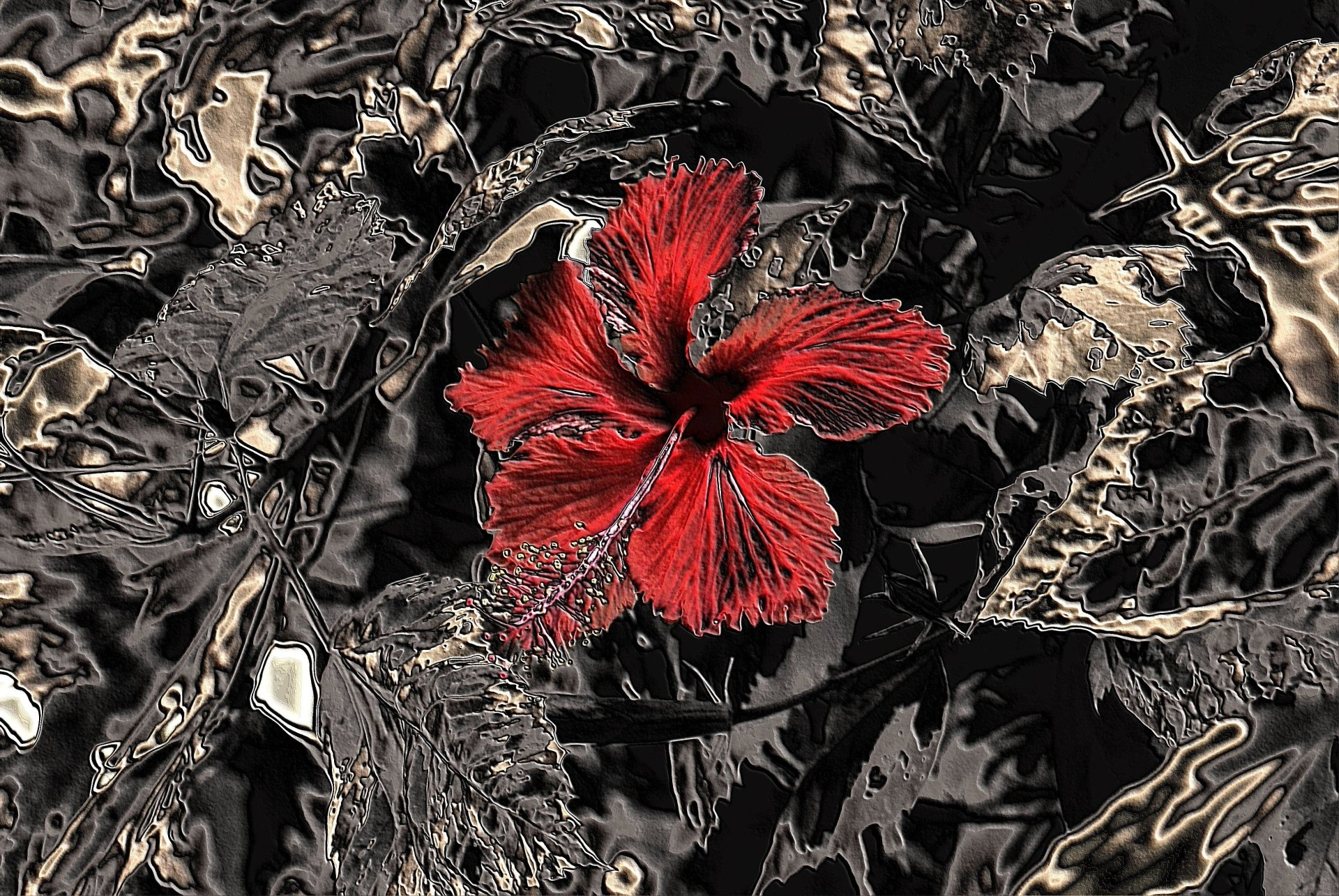 Artistic - Flower  Abstract Red Flower Black Wallpaper