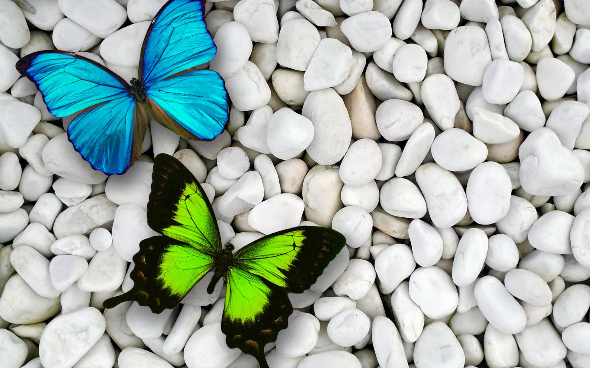 Butterflies On White Pebbles Full HD Wallpaper And Background Image