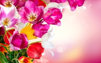 HD Wallpaper | Background Image ID:701231