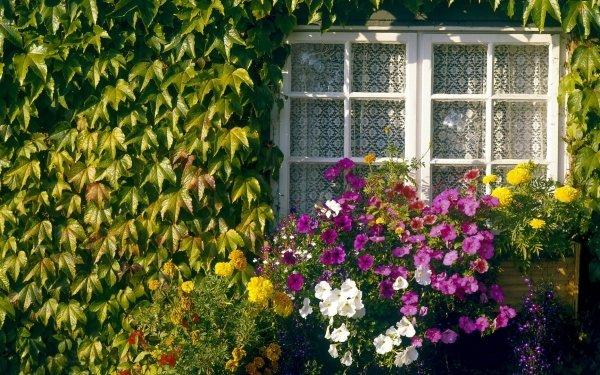 Man Made Window Ivy Green Leaf Flower HD Wallpaper | Background Image