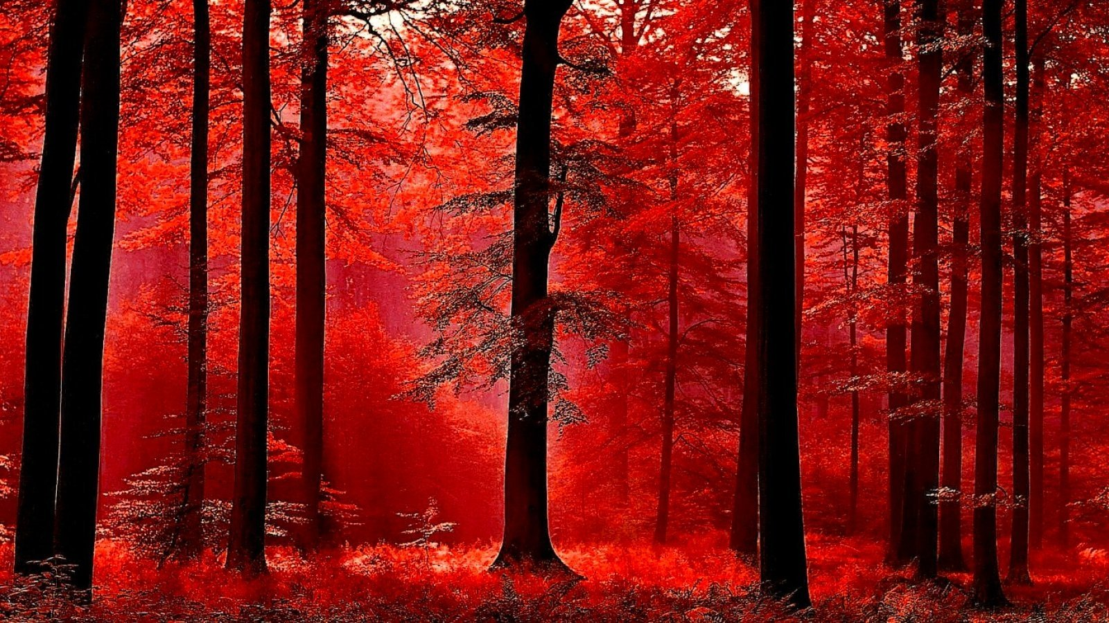 Red forest trees Ringtones and Wallpapers Free by