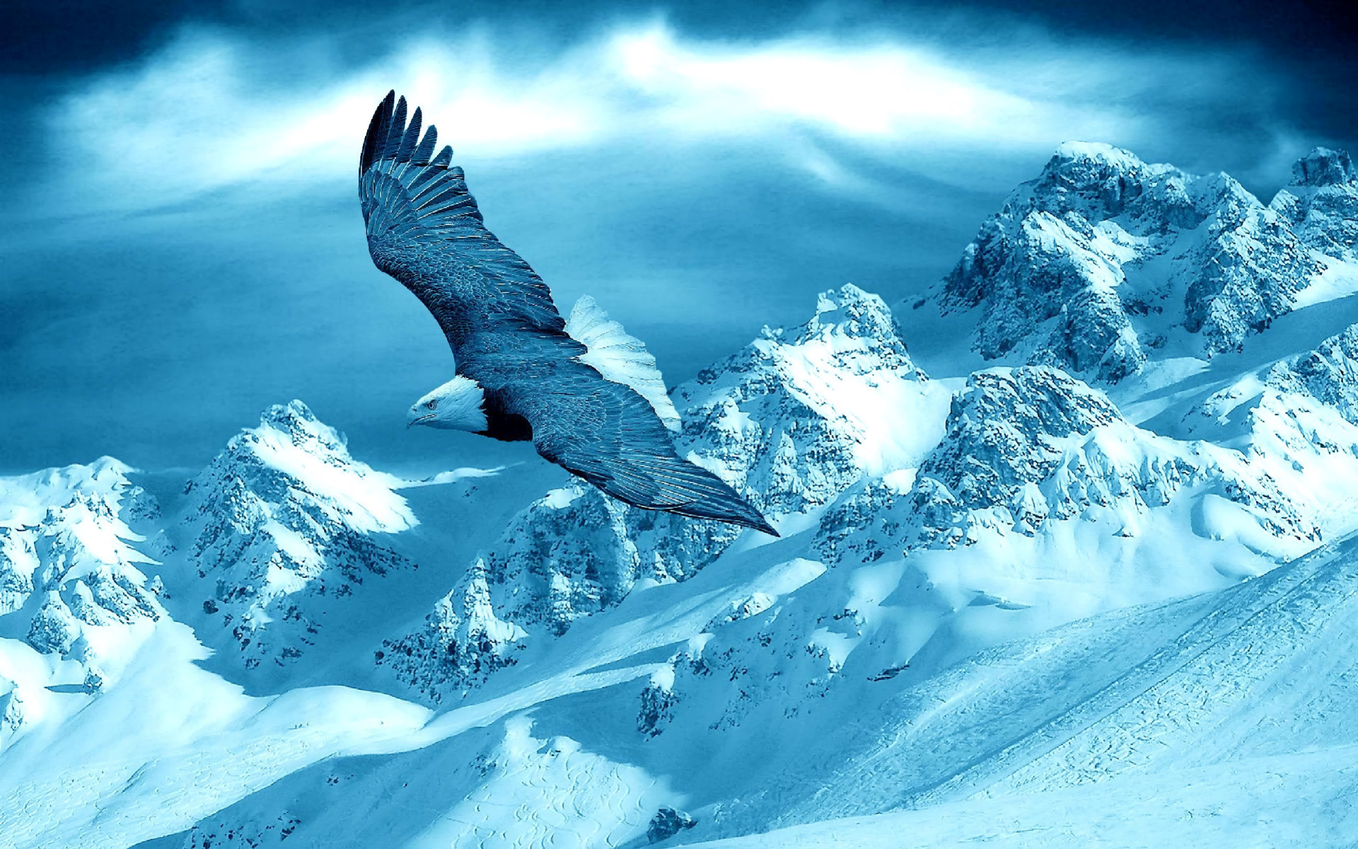 Eagle Flying Over Winter Landscape Full HD Wallpaper And