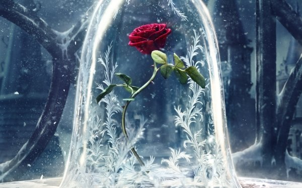 Film Beauty And The Beast (2017) Rose Red Rose Fleur Fond d'écran HD | Image