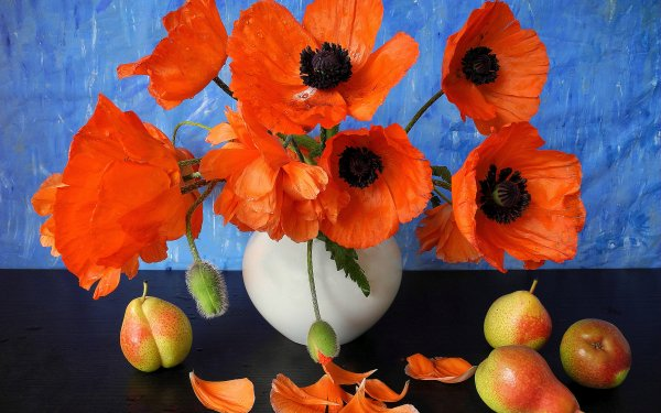 Photography Still Life Flower Anemone Poppy Fruit Orange Flower Pear Vase Petal HD Wallpaper   Background Image