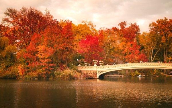 Man Made Central Park Bridge Fall River Foliage Bow Bridge HD Wallpaper | Background Image