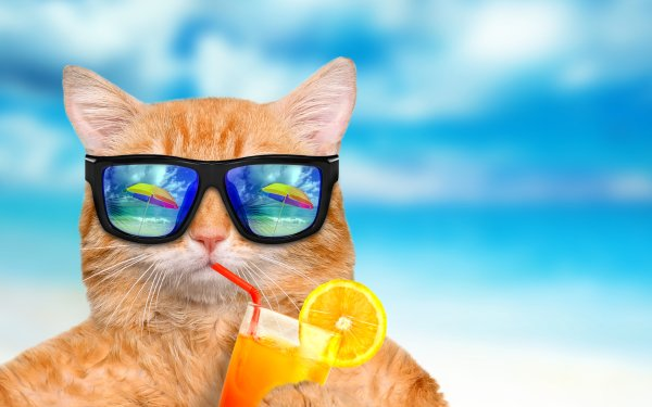 Humor Cat Cats Cocktail HD Wallpaper | Background Image