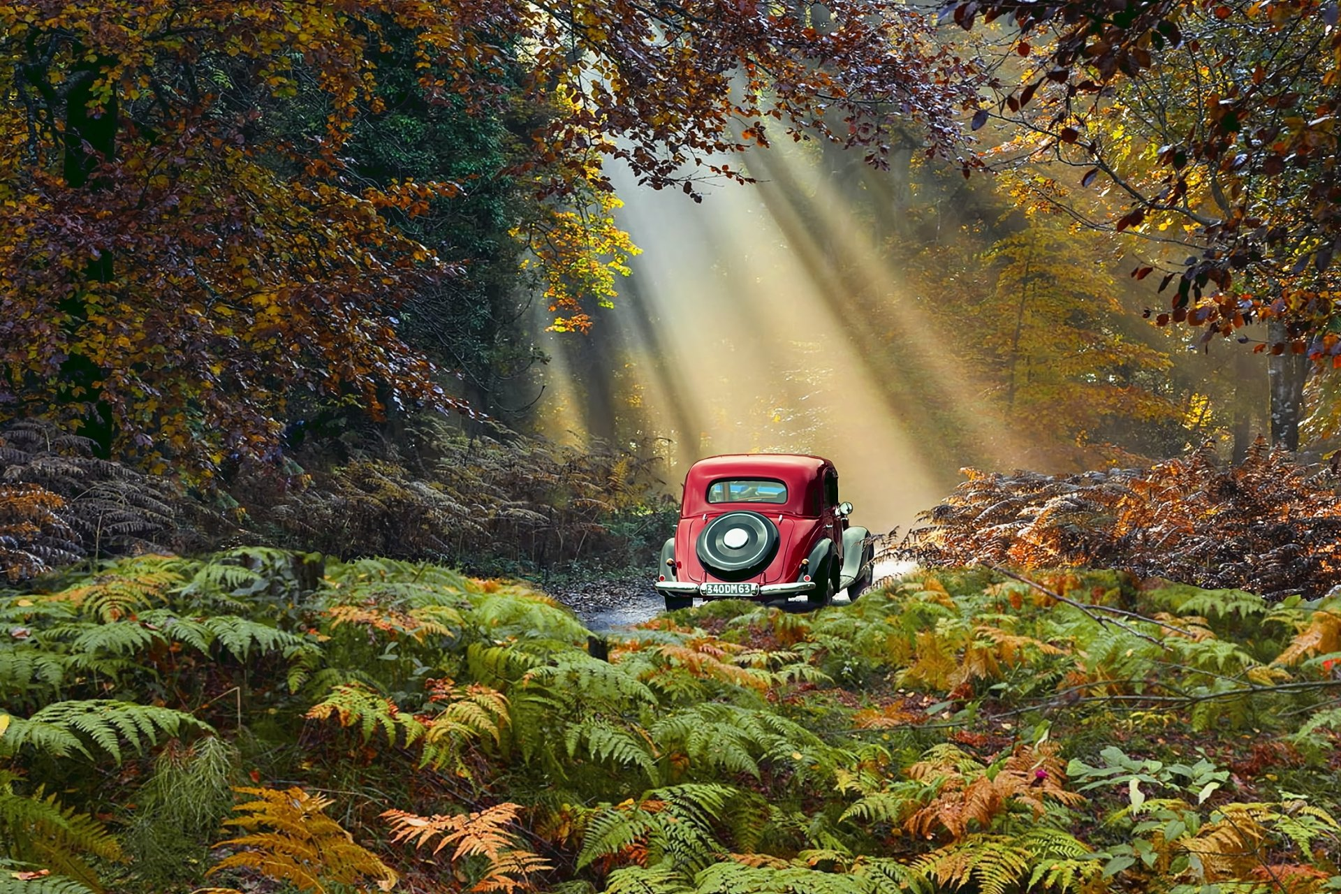 Fondos De Pantalla De Quikis: Autumn Road Trip HD Wallpaper