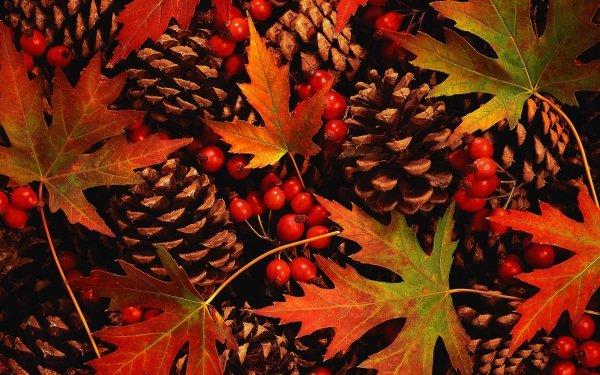 Tierra/Naturaleza Otoño Hoja Baya Pine Cone Fondo de pantalla HD | Fondo de Escritorio