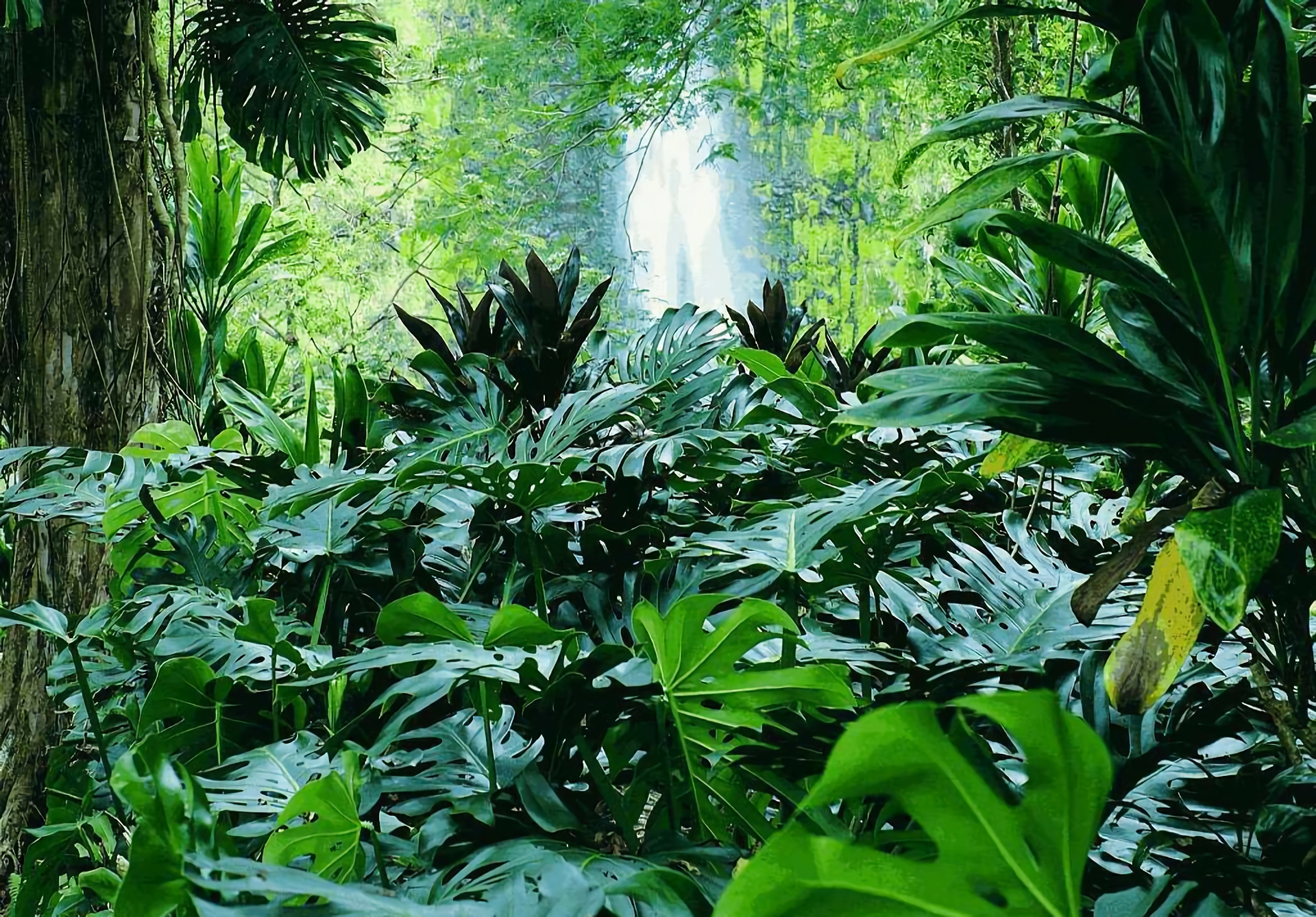 Waterfall In Tropical Forest Fondo De Pantalla Hd Fondo De