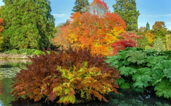 Man Made Garden Fall Tree Foliage HD Wallpaper | Background Image