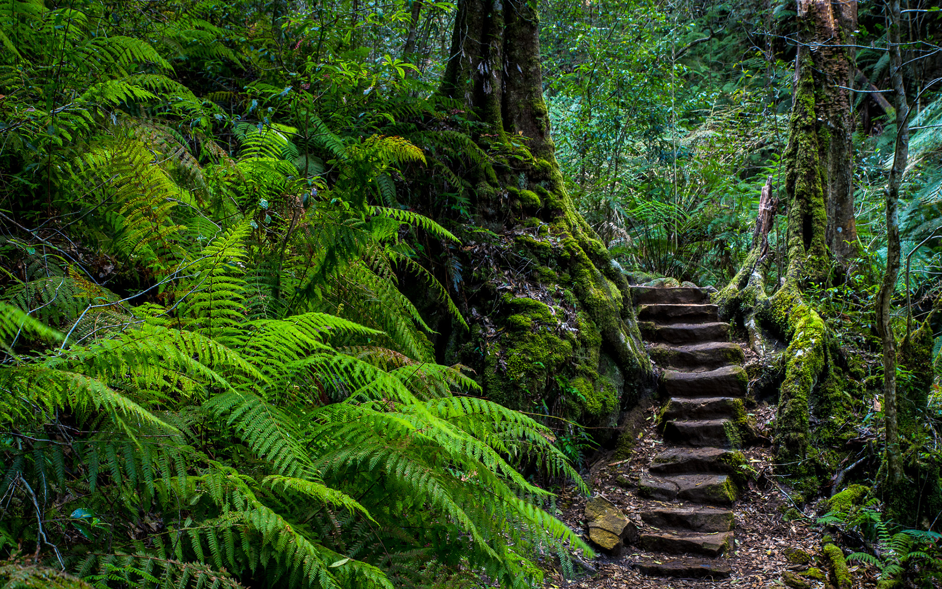 stone steps in tropical forest hd wallpaper background
