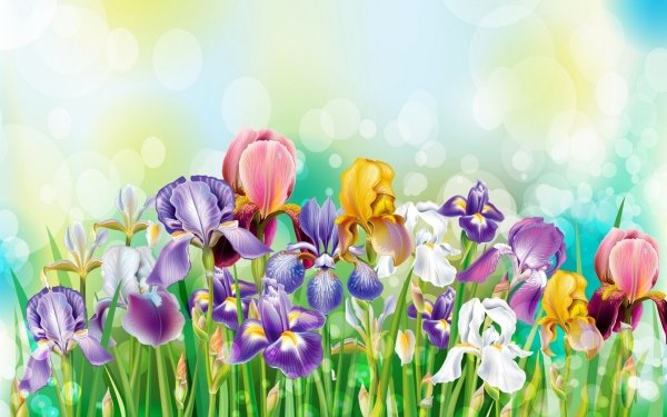 Artistic Flower Flowers Colors Colorful Grass Spring Iris HD Wallpaper   Background Image