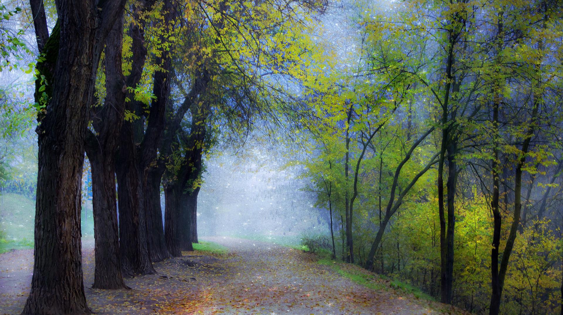 Обои misty, forest, Road. Природа foto 11