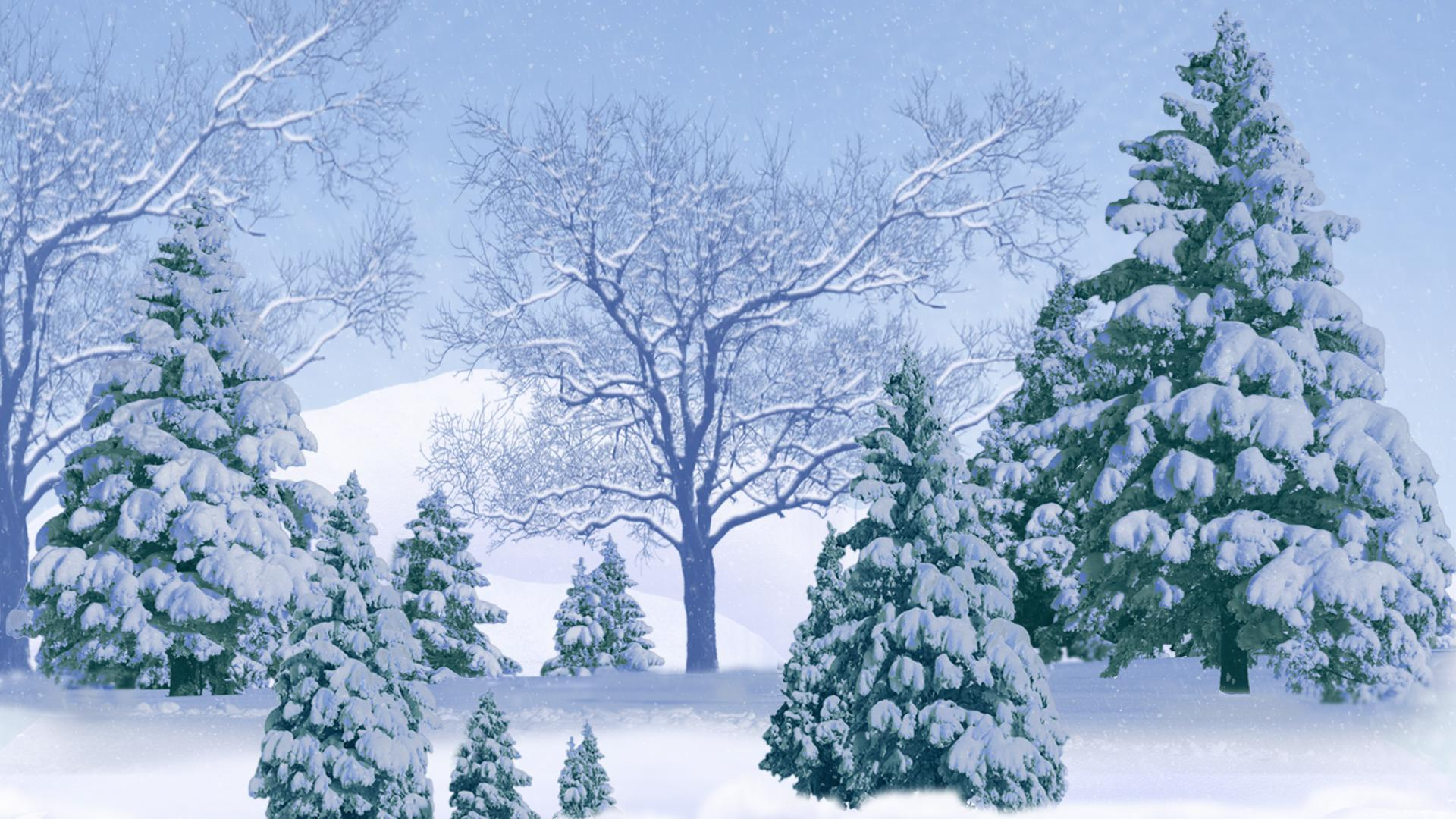 Winter Forest Full HD Wallpaper And Background Image