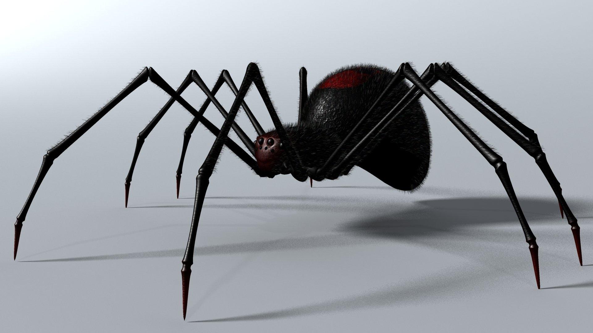 CGI - Spider  3D Animal CGI Digital Arachnid Black Wallpaper