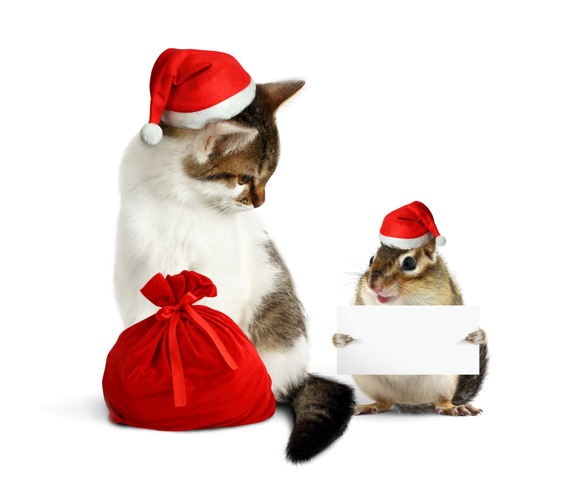 Holiday - Christmas  Animal Cat Hamster Santa Hat Wallpaper