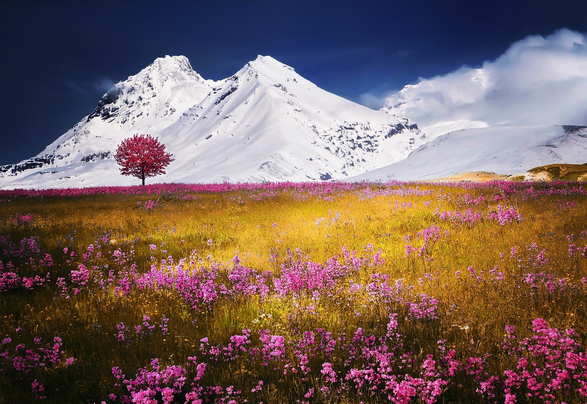 Earth - Mountain  Nature Snow Tree Lonely Tree Pink Flower Flower Meadow Wallpaper