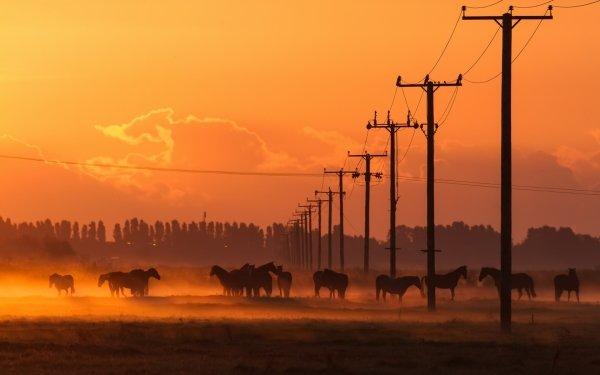 Animal Horse Fog Sunset Power Line HD Wallpaper | Background Image