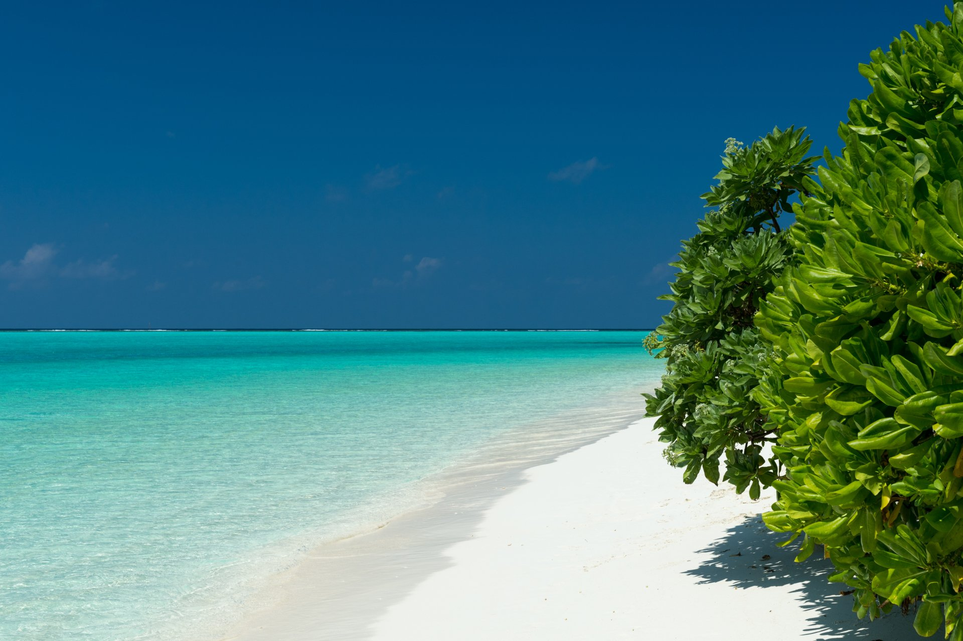 Jorden/Natur - Havet  Jorden/Natur Sea Turquoise Tree Tropical Maldives Horizon Bakgrund