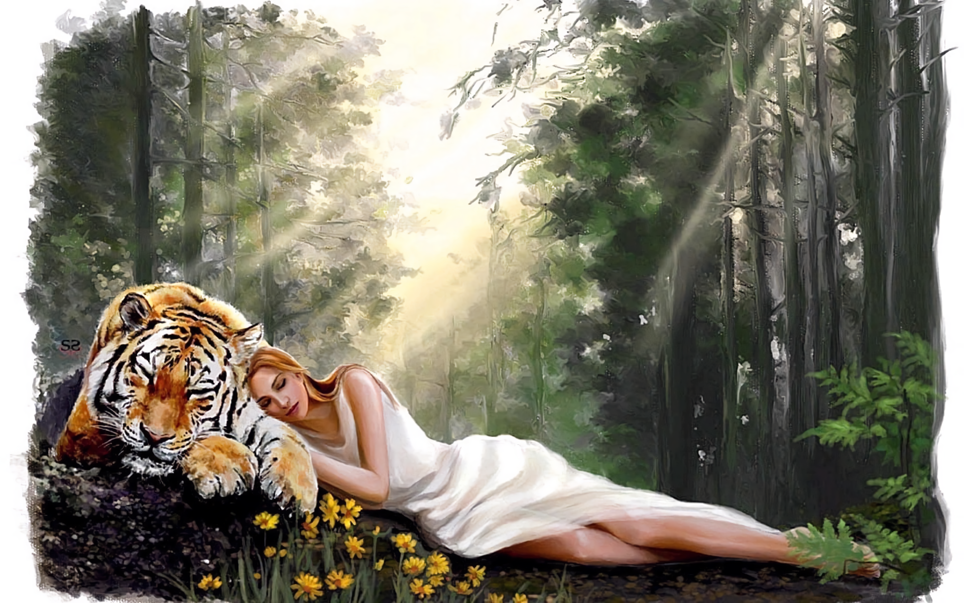 Napping in the Forest HD Wallpaper | Background Image ...