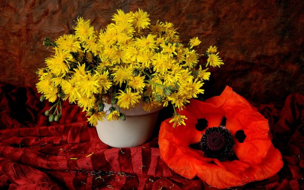 Photography Still Life Dandelion Anemone Yellow Flower Red Flower HD Wallpaper   Background Image