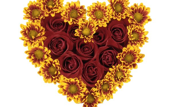 Artistic Heart Flower Rose Chrysanthemum Red Flower Yellow Flower HD Wallpaper   Background Image