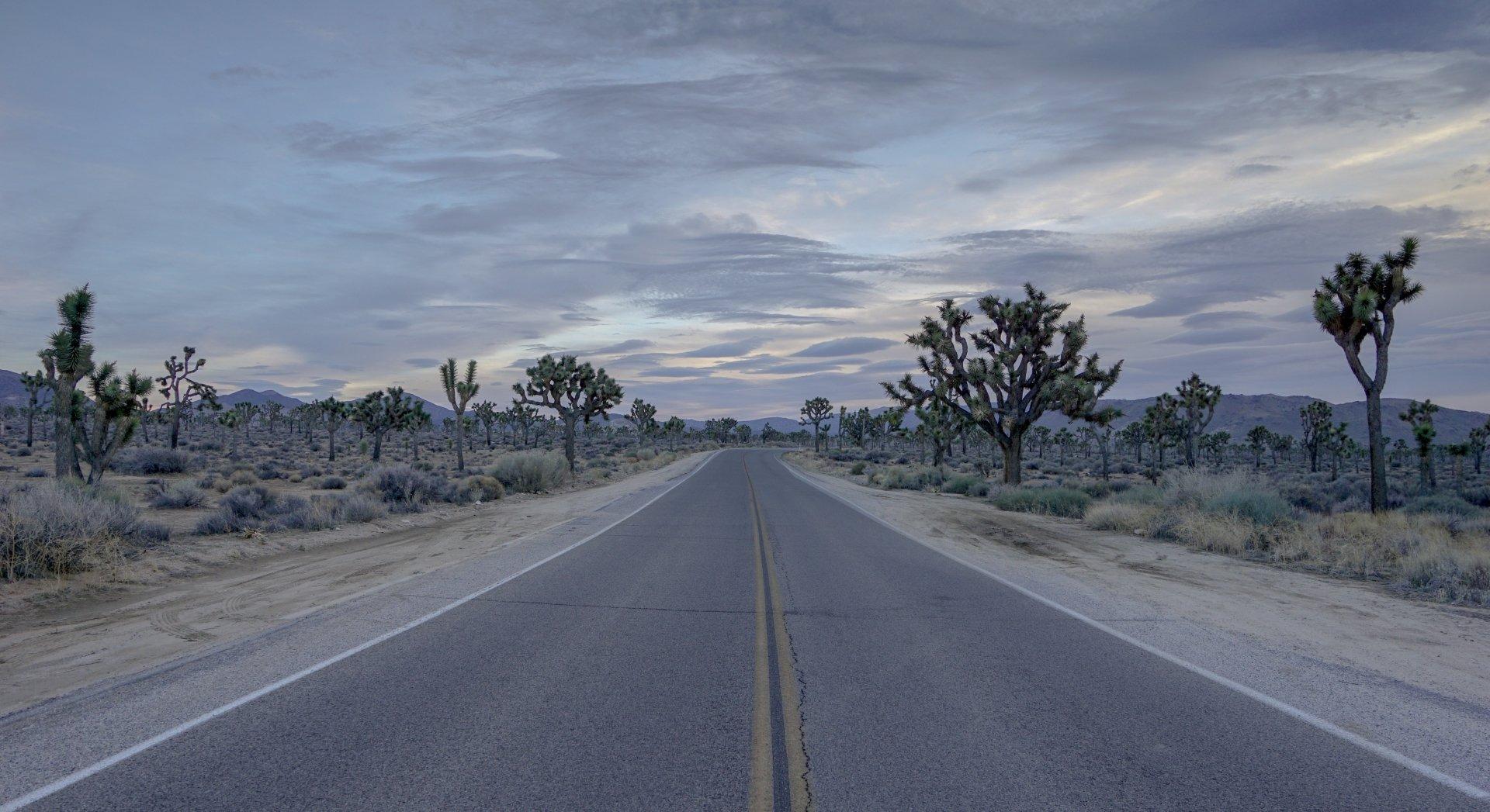 Earth - Joshua Tree National Park  Tree Road California America Desert Highway Wallpaper