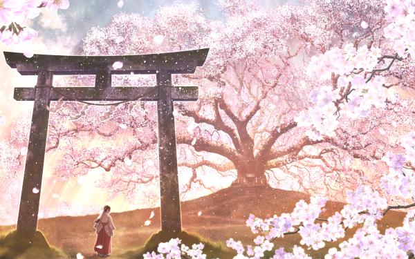 Anime Original Cherry Blossom Florecer Petal Pink Flower Flor Árbol Primavera Oriental Shrine Traditional Costume Fondo de pantalla HD | Fondo de Escritorio
