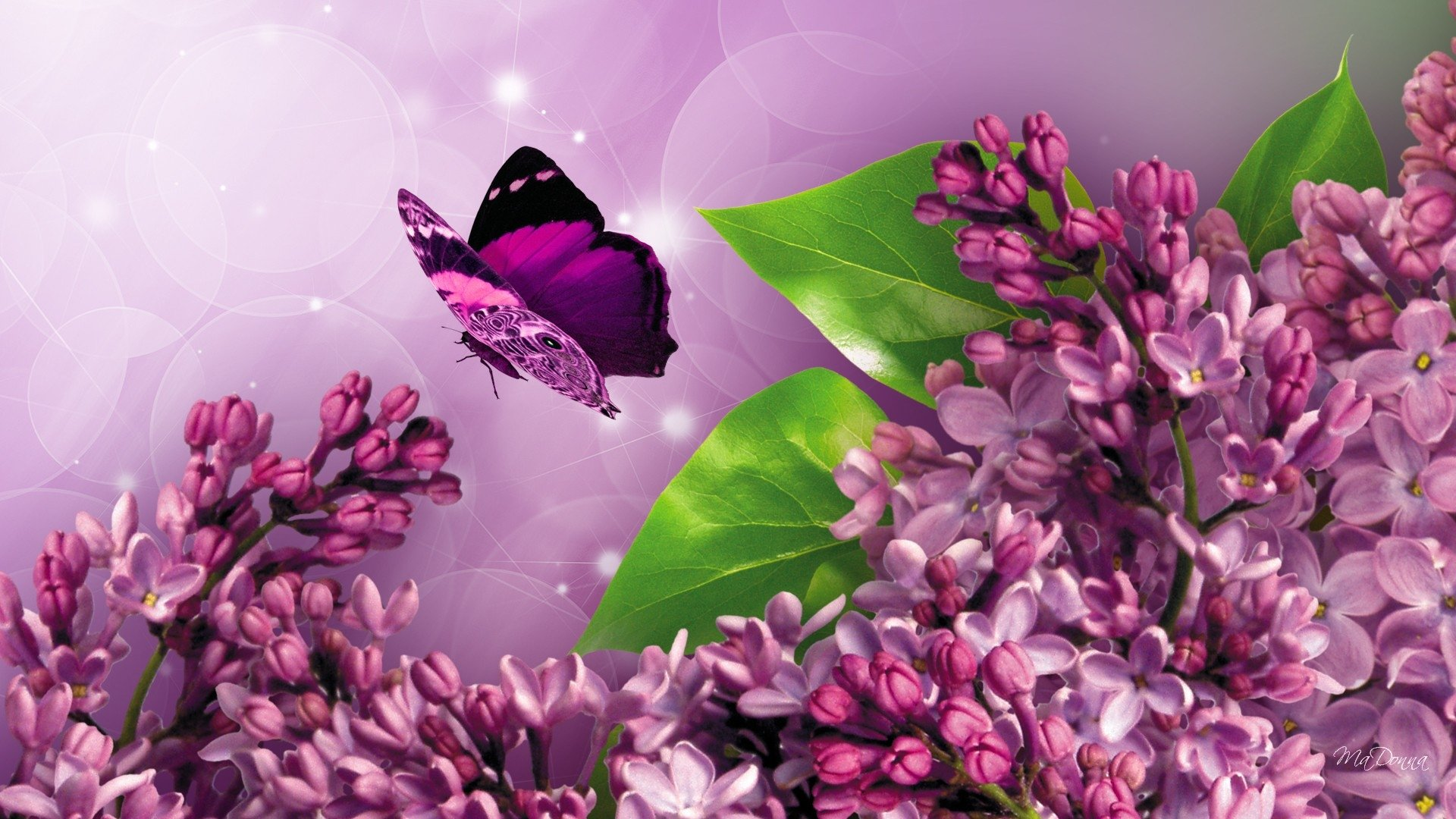 lilacs and butterfly full hd wallpaper and background