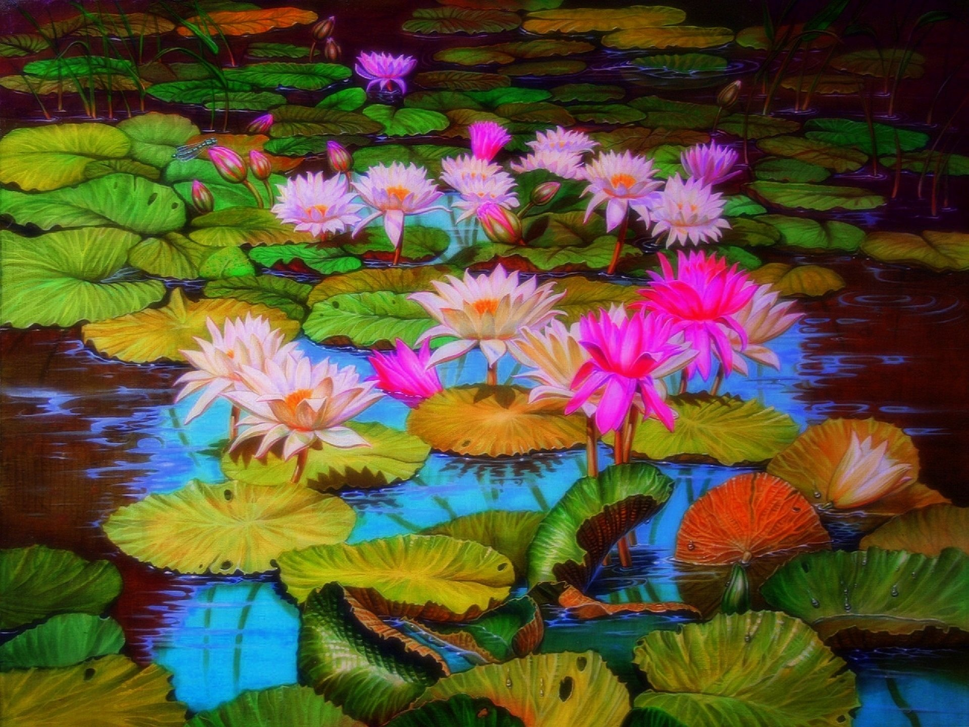 Lily Pads and Lotus Flowers HD Wallpaper | Background ...