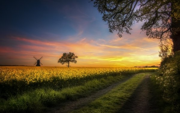Man Made Windmill Buildings Nature Field Horizon Summer Yellow Flower Rapeseed Path HD Wallpaper   Background Image