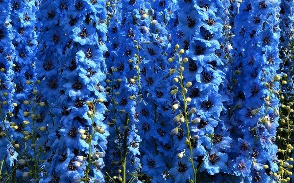 Earth Flower Flowers Blue Flower HD Wallpaper | Background Image