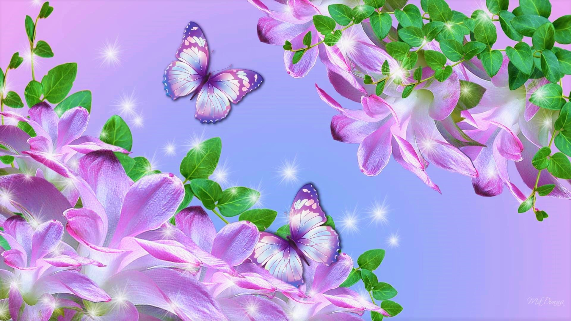 Flowers And Butterflies Hd Wallpaper Background Image 1920x1080