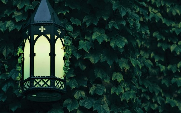 Man Made Lantern Light Leaf Ivy Green HD Wallpaper | Background Image