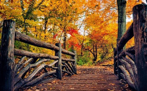 Construction Humaine Pont Ponts Wooden Automne Arbre Foliage Fond d'écran HD | Image