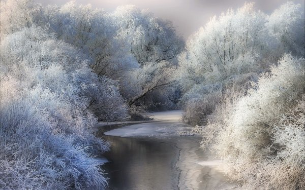 Earth Winter Tree Pond Snow Frost HD Wallpaper | Background Image
