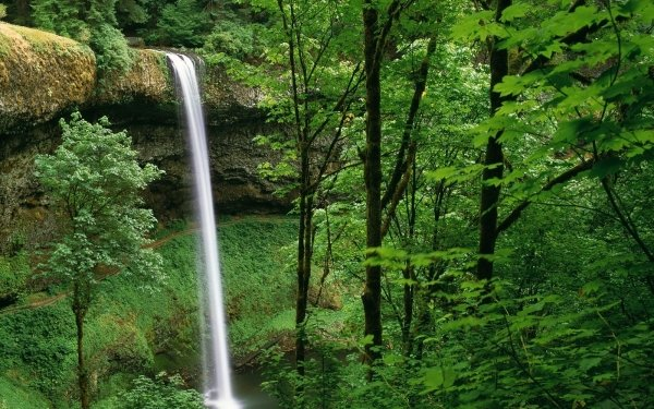 Earth Waterfall Waterfalls Silver Falls Oregon Forest Green Water Nature HD Wallpaper   Background Image