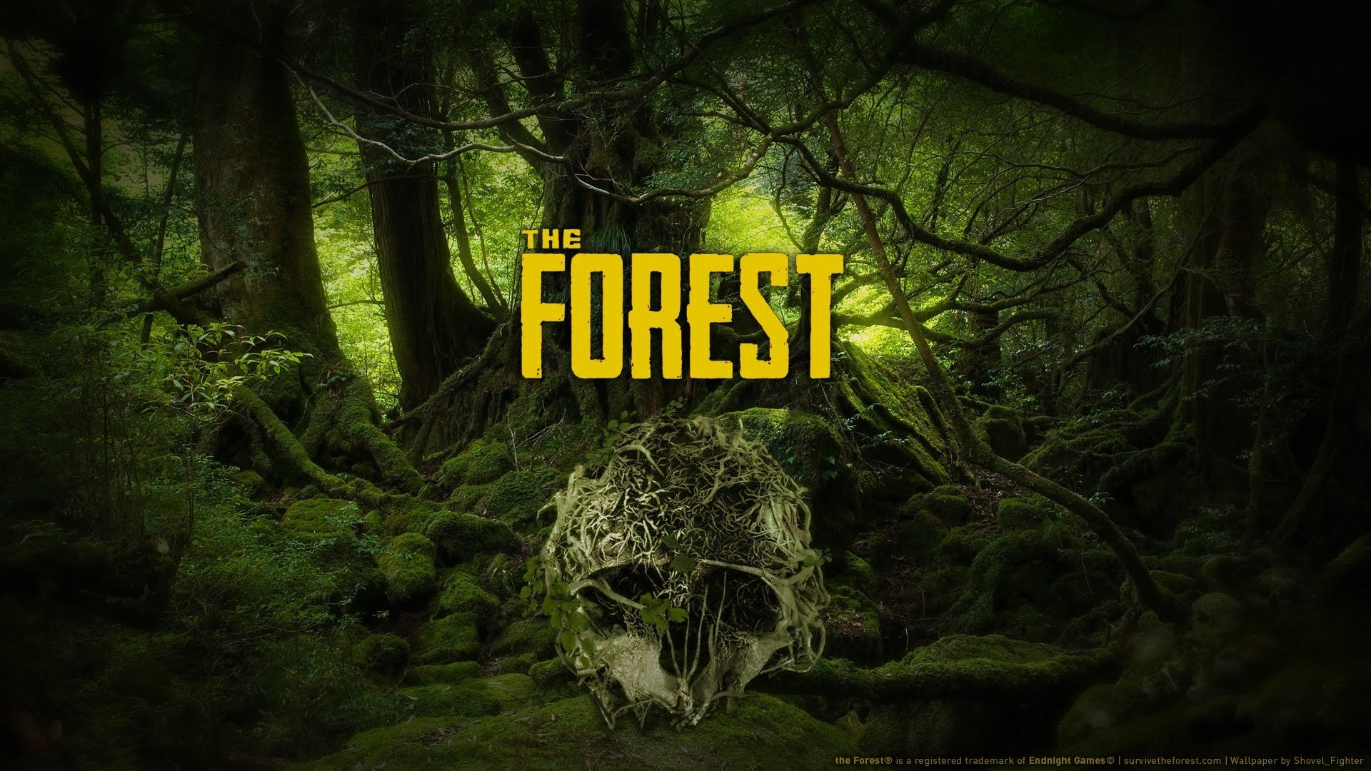 the forest hd wallpaper background image 1920x1080 id 889405wallpapers id 889405