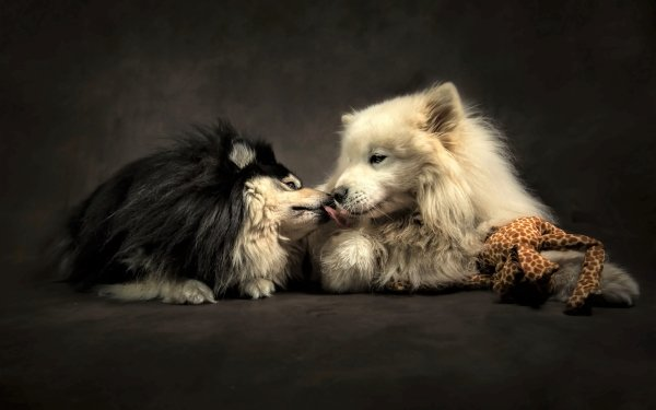 Animal Dog Dogs Cute Friend Love Kiss HD Wallpaper | Background Image