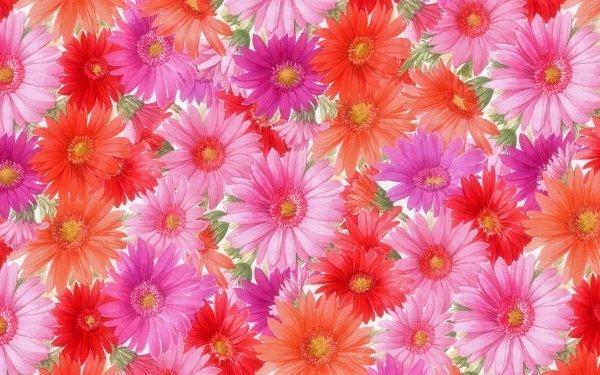 Artistique Fleur Fleurs Gerbera Orange Flower Red Flower Pink Flower Fond d'écran HD | Image