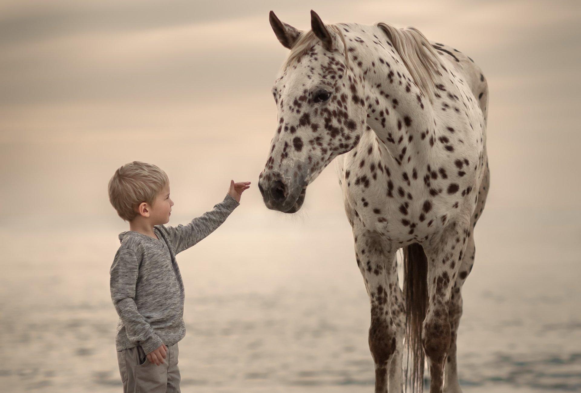 Photography - Child  Little Boy Boy Horse Wallpaper
