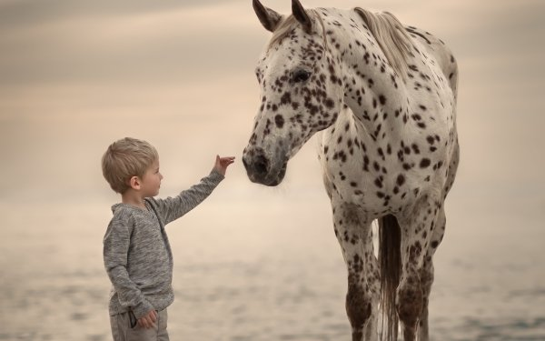 Photography Child Little Boy Horse HD Wallpaper | Background Image