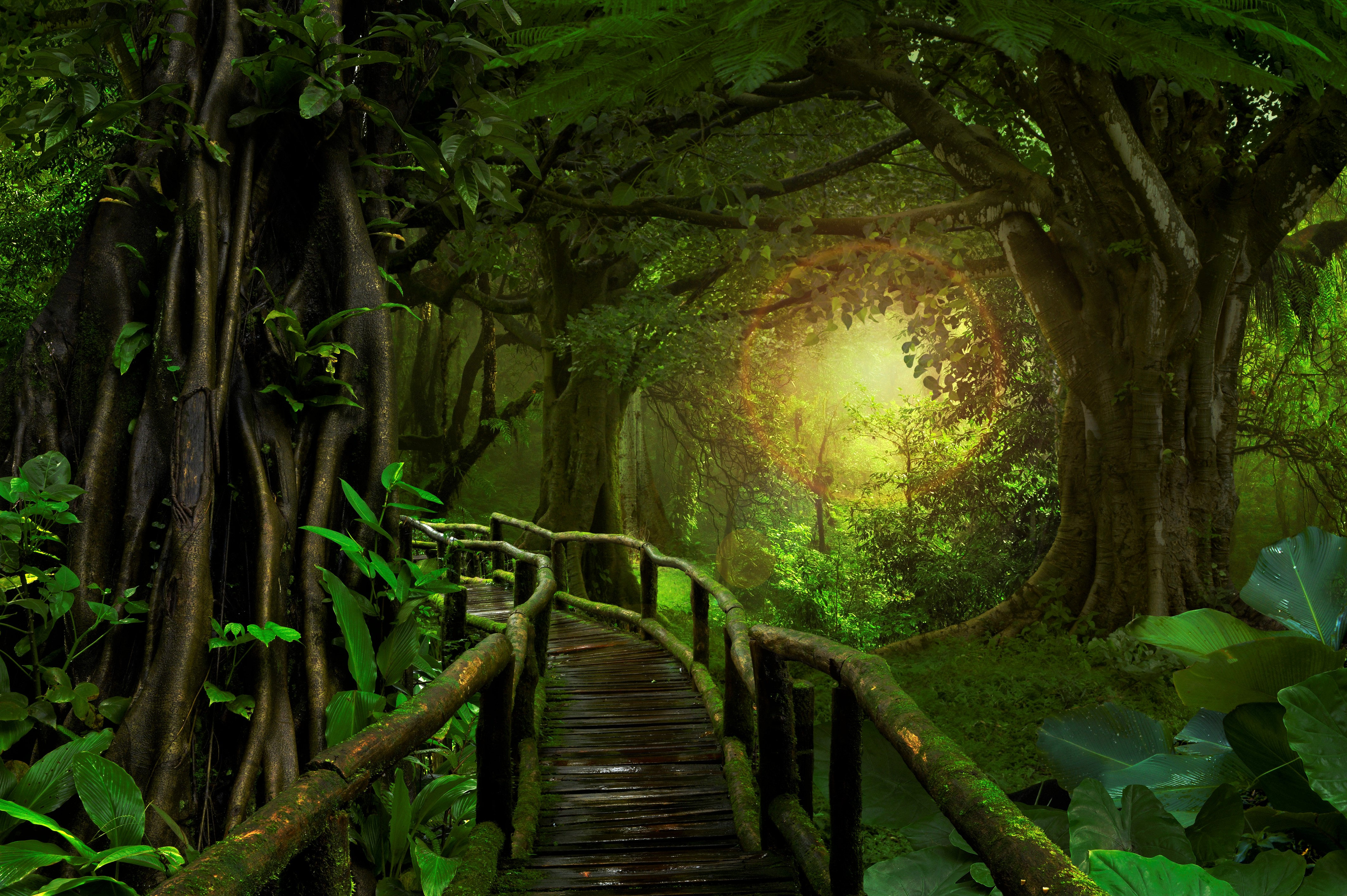 Bridge In Tropical Forest 4k Ultra HD Wallpaper And Background Image