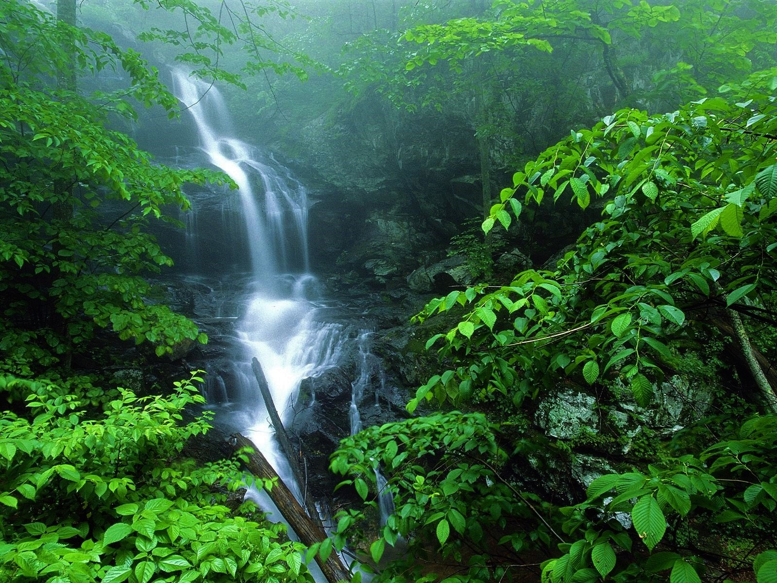 Earth - Waterfall  Greenery Fog Leaf Rock Forest Earth Wallpaper