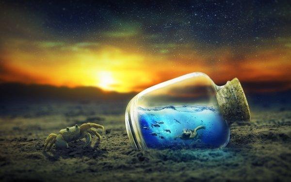 Photography Manipulation Crab Turtle Bottle HD Wallpaper | Background Image