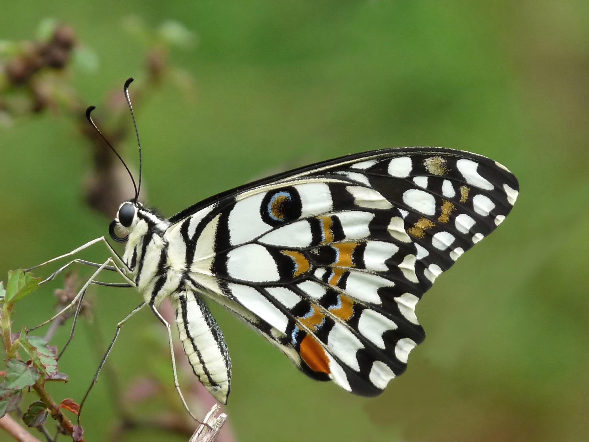 Indahnya Kupu Kupu Terbang di Dedaunan