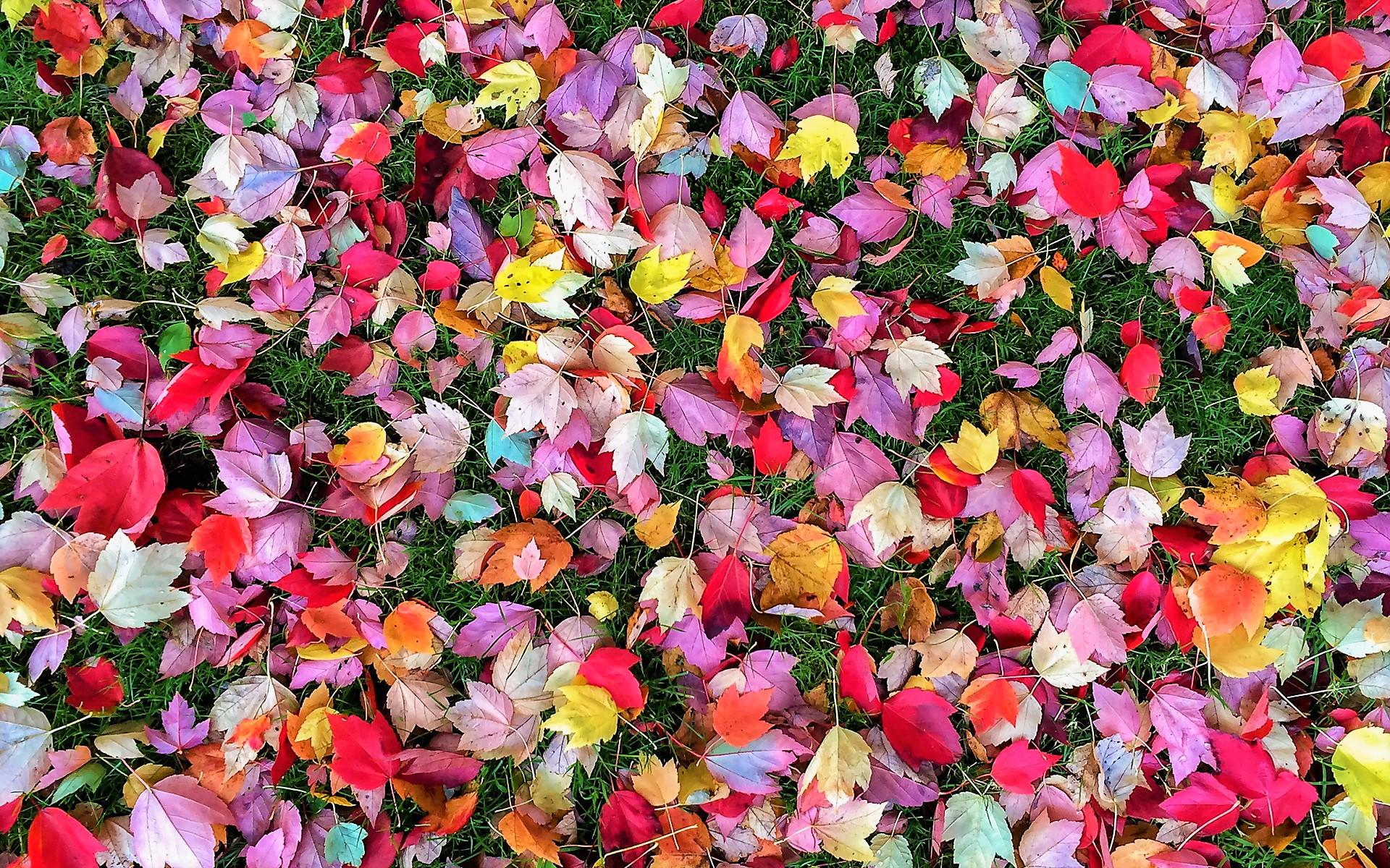 Colorful Autumn Leaves Fondo De Pantalla Hd Fondo De