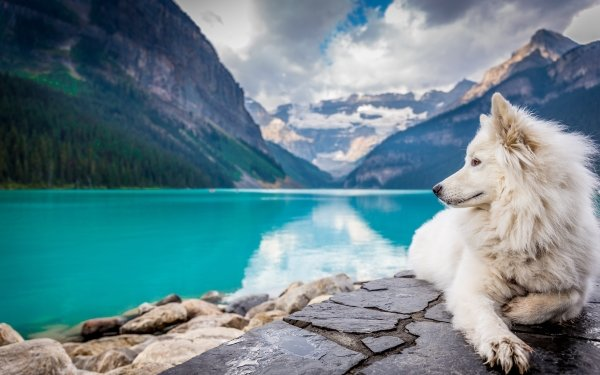 Animal Dog Dogs Lying Down Lake Canada Pet Banff National Park Depth Of Field Mountain HD Wallpaper | Background Image
